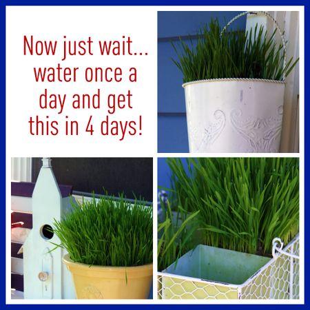 Grass collage 2